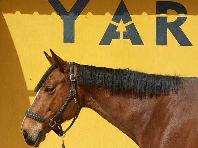 Jaraba_yar - caballos y yeguas en Zaragoza