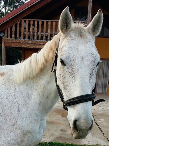 FURIO - caballos y yeguas en Zaragoza